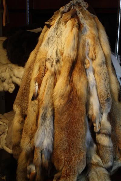 Выделка шкур лисы в домашних условиях уксусом
